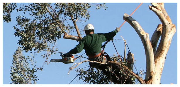 Tree Work Driscoll Tree Brunswick Maine