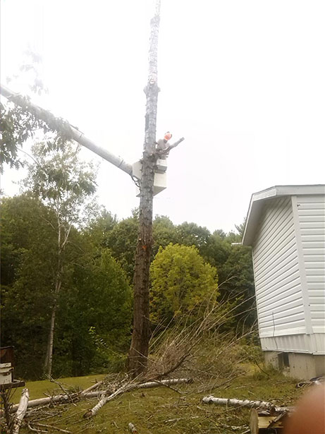 Tree Removal by Driscoll Tree Service